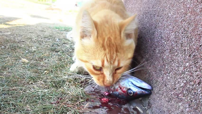 eliminating cat odor home