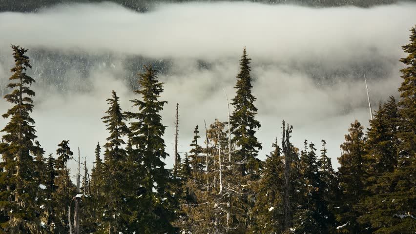 Time lapse of fog rolling in and out of the mountains. Mt. Washington B.C. Canada