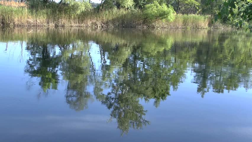 Reflection of branches of trees on a surface of water and natural voices of singing birds.