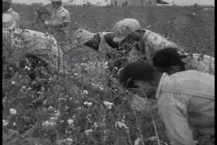 1930s - Racist overtones accompany this 1933 documentary about cotton sharecroppers in the South.