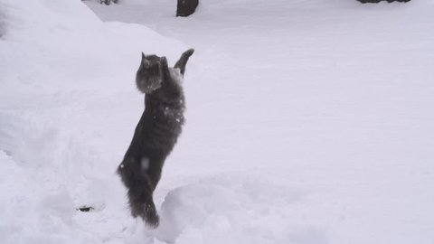 SLOW MOTION: Cat catching snowballs