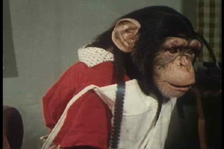 1950s - A chimp edits film in the studio.