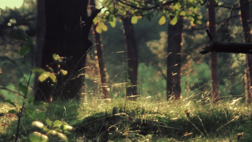 Beautiful woods in warm sun light. Full HD footage. Colorful forest with lots of trees, bugs in spring. | Shutterstock HD Video #4006606