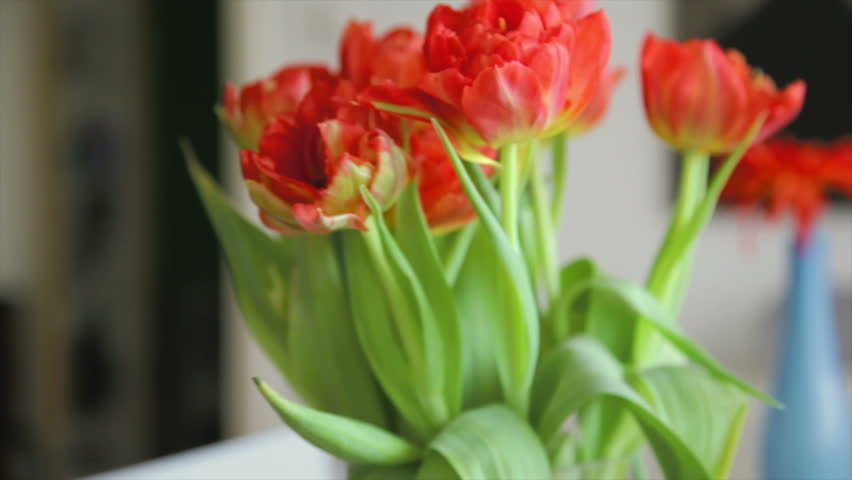 beautiful tracking shot of flowers at home - HD stock video clip