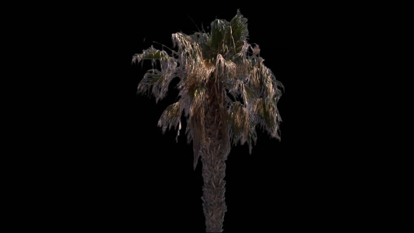 Isolate palm tree with alpha matte