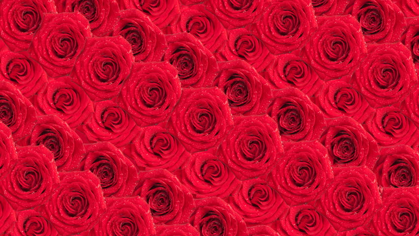 Hd bouquet of red roses stock footage video 12638684 - Bouquet of red roses hd images ...