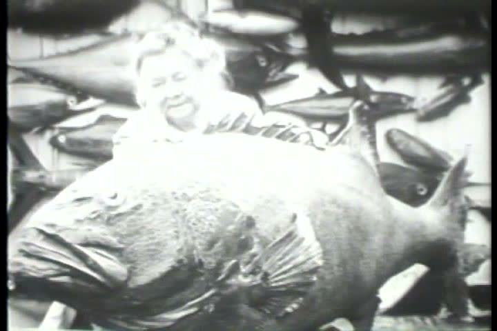 1920s - Black and white footage of stuffed sea creatures in the 1920s