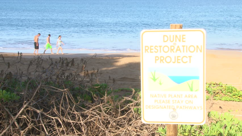 Sign reading dune restoration project on sandy beach on Maui, Hawaii.