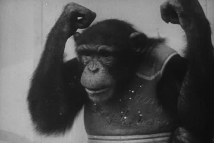 1950s - Hilarious animal antics from the 1950s. | Shutterstock HD Video #4243079