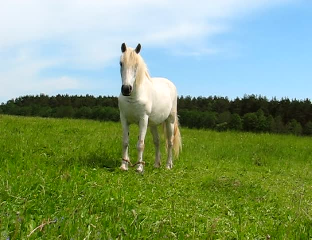 white horse on the meadow #424549