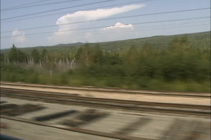 Siberian forest from train