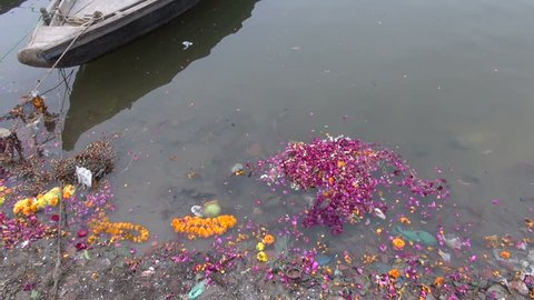 flowers after ritual in dirty Ganges river water, Varanasi,India