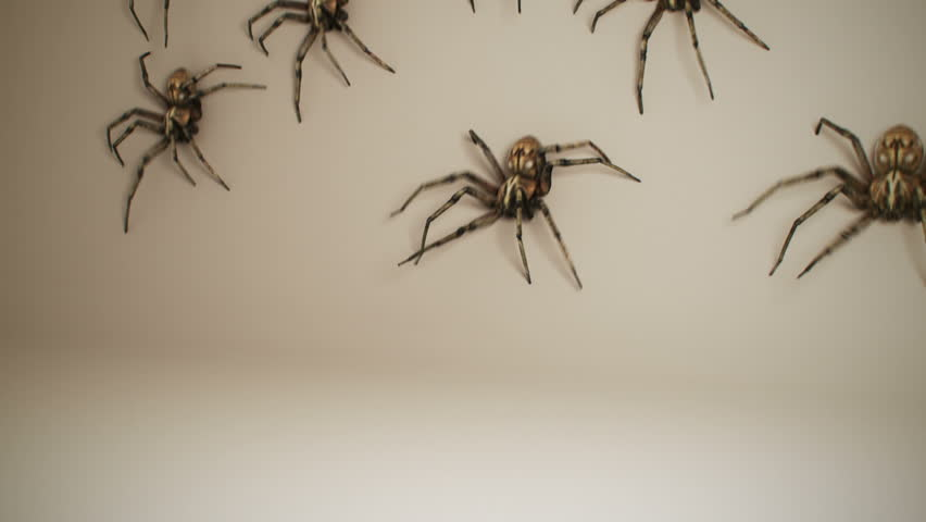 Dozens of big venomous spiders crawling across white wall. Spiders invading home. #4326926