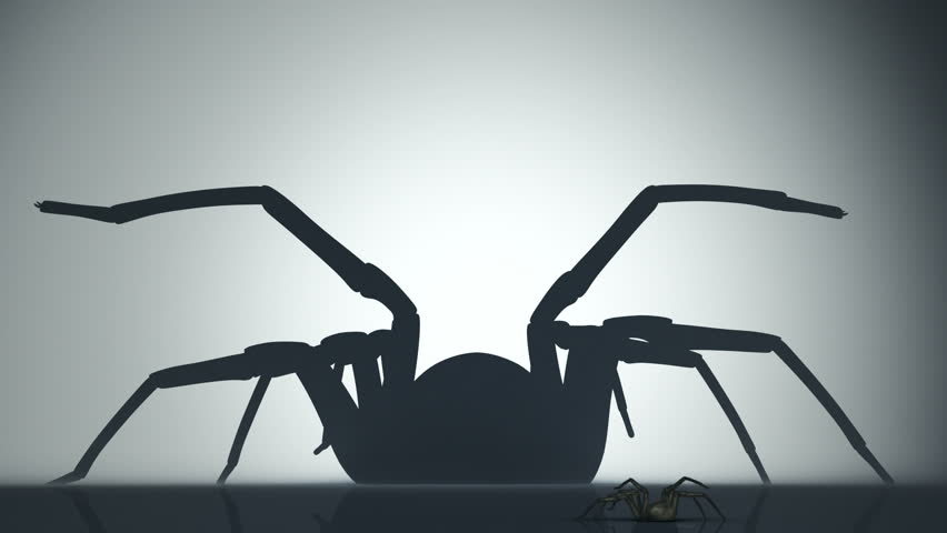 Big venomous spider watching his shadow on the wall. Animation of backlighted spider.