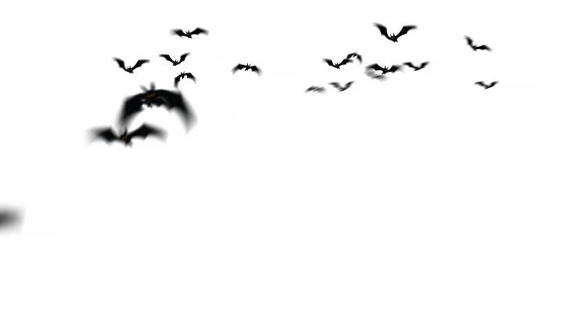 Swarm of creepy bats animation.