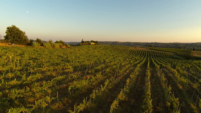 flying over an vineyard in tuscany