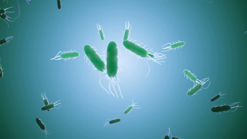 An animated clip of a large colony of bacteria with multiple flagella. Seamless loop.