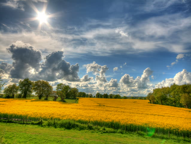 Clouds and blue sky over yellow flowers fields, HD time lapse clip, high dynamic range imaging