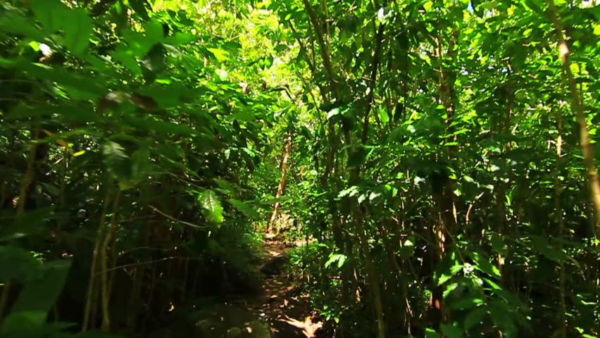 Steadicam Shot Thru Tree Forrest | Shutterstock HD Video #4576499
