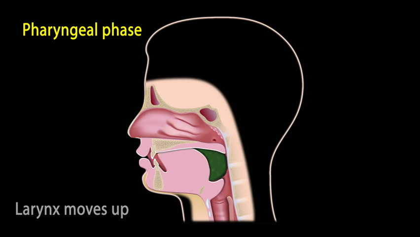 Pharynx Stock Video Footage - 4K and HD Video Clips | Shutterstock