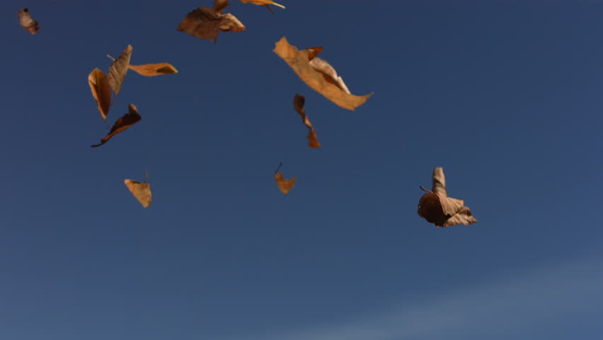 Falling Fall leaves, slow motion