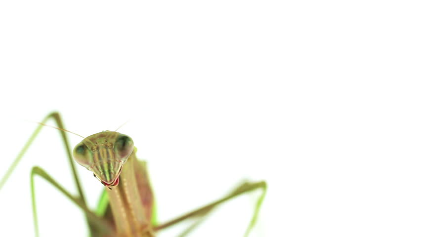 Header of mantid