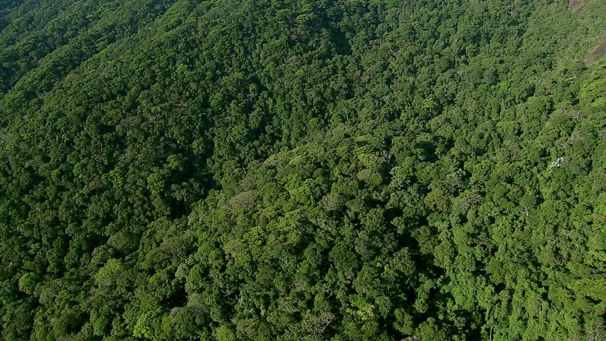 Flying over lush jungle, Rio de Janeiro, Brazil