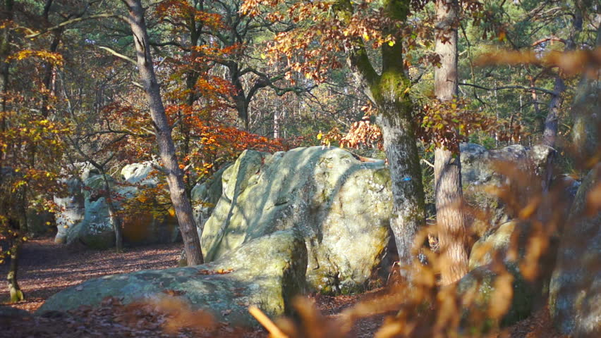 Forest of Fontainebleau with autumnal foliage | Shutterstock HD Video #4857719