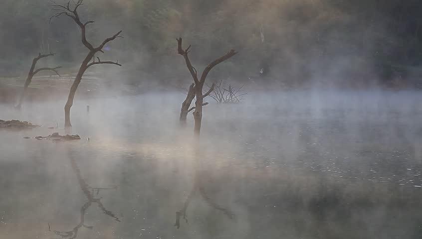 Jiulonghu Lake in Zixi, Dead tree on the lake under morning mist | Shutterstock HD Video #4880189