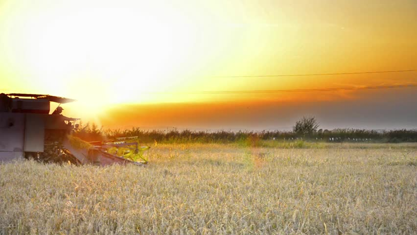 Harvesting at sunset - Stock Video. Combine collecting the crops | Shutterstock HD Video #4881425