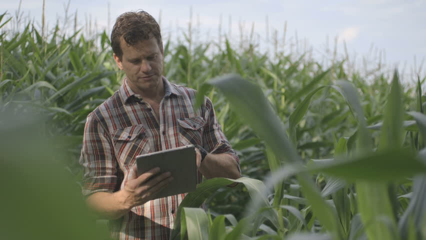Mature Male Farmer n standing and using digital tablet in corn field | Shutterstock HD Video #4905389