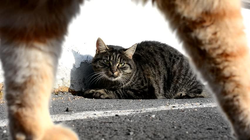 Header of Cat