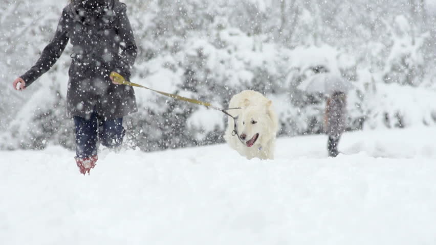 Spectacular Slow Motion Of White Swiss Shepherd Dog Running Through High Snow