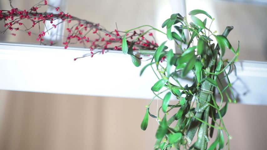 Header of mistletoe