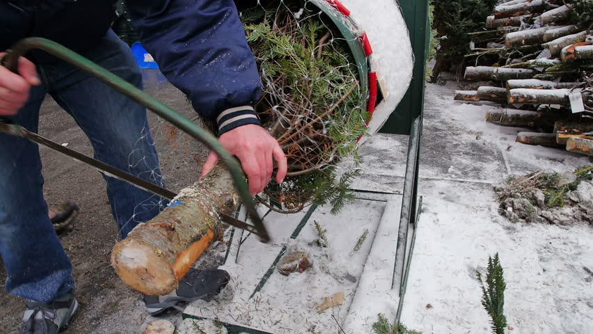 A man saws a Christmas tree in preparation for delivery.