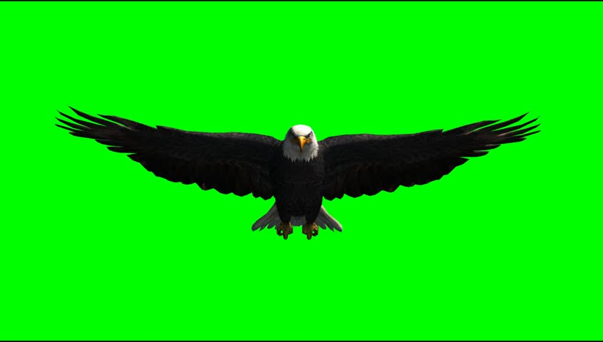 Green screen video clips