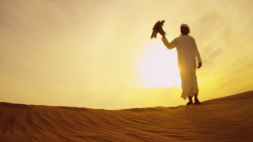 Trained bird of prey perching gloved wrist of middle eastern male owner at sunset desert location shot on RED EPIC, 4K, UHD, Ultra HD resolution