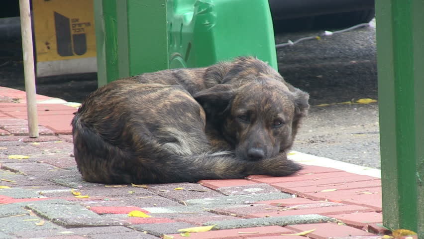 Stray and wet dog on the streets.