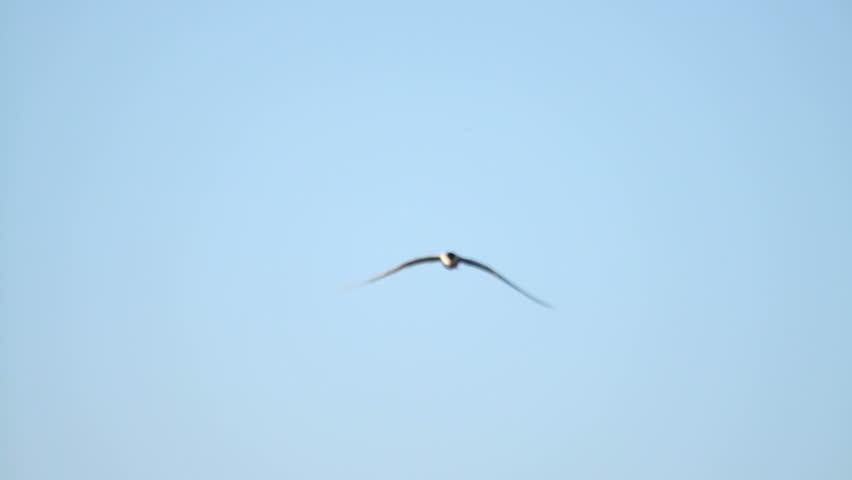 Μεγάλο πουλί τραβεστί επί θηλυκό