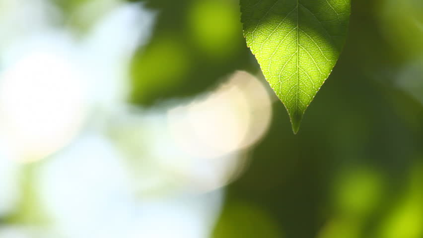 Beautiful bright background, close-up of a green leaf
