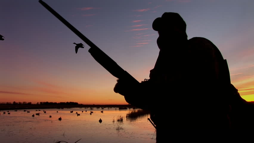 Duck Hunting, hunter loading shotgun as Mallards fly by. silhouette
