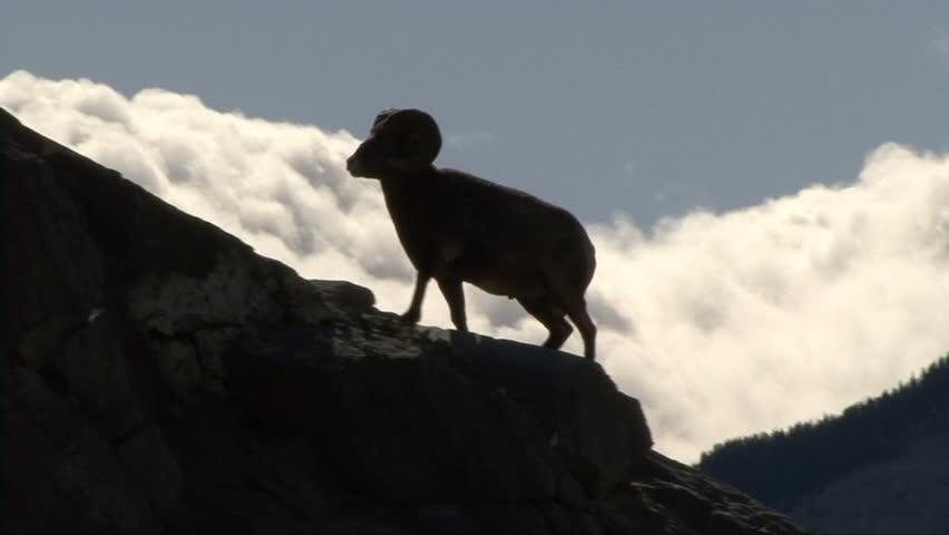 Header of Ram