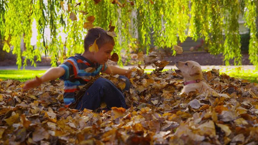Young boy and puppy playing in fall leaves. Shot on RED EPIC for high quality 4K, UHD, Ultra HD resolution.