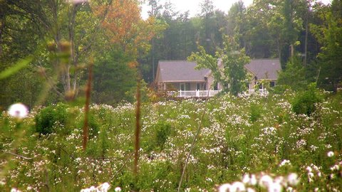 A field of wild flowers and flying seeds with a house in the back drop