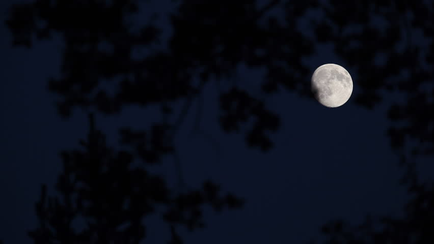 Almost full moon moving fast across dark night sky (shot through branches of a majestic tree)