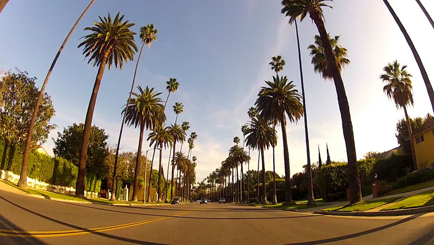 BEVERLY HILLS, CA: February 19, 2014- Wide shot of driving through a suburban neighborhood under tall palm trees circa 2014 in Beverly Hills. Features view of this famous palm tree lined street. | Shutterstock HD Video #5739425