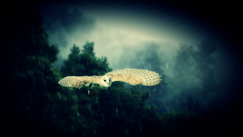 A white owl in slow motion flight.