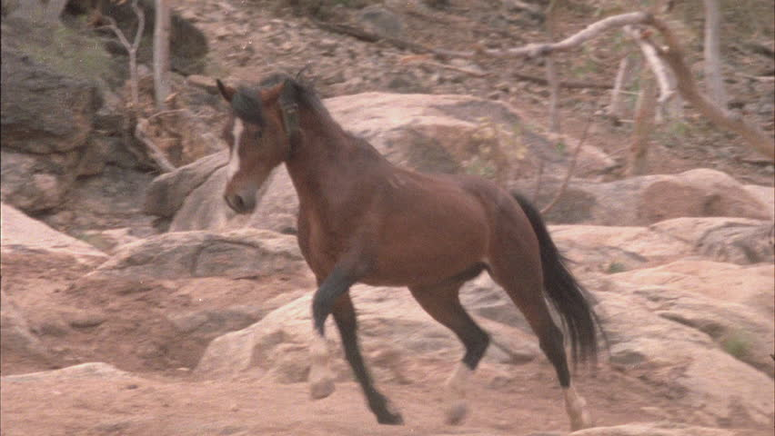 Brumbies trotting around, one bites another