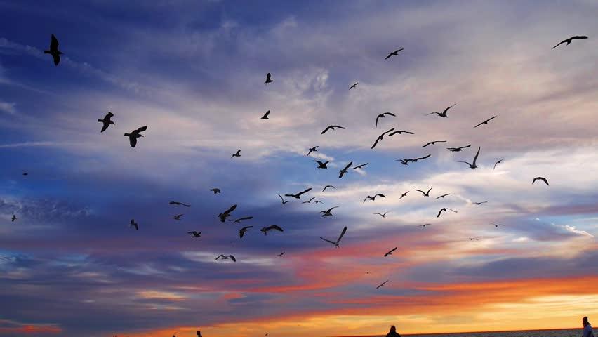 Sky and bird ile ilgili görsel sonucu