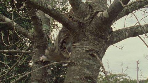 Feral Cat kitten in a tree